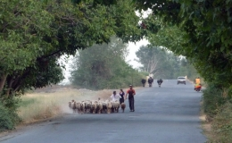Evening rush-hour, Azerbaijan