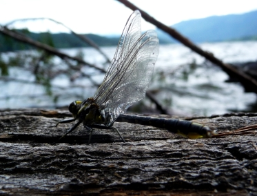 The small wonders, Shuswap Lake